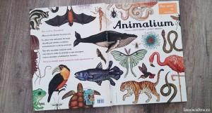 """""""Animalium"""": regnul animal în toată splendoarea lui"""